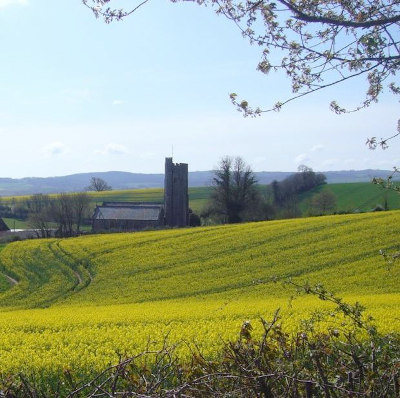 Oil-seed rape field with church behind. Blue sky framed by branches with blossom top-right.